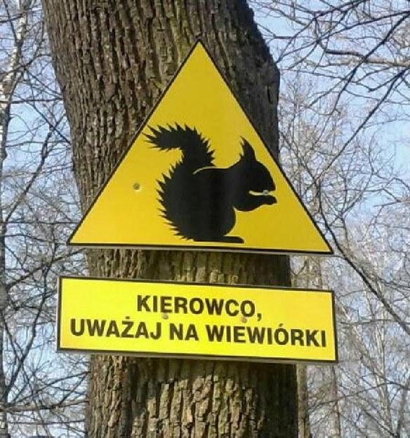 Uwaga na orzeszki