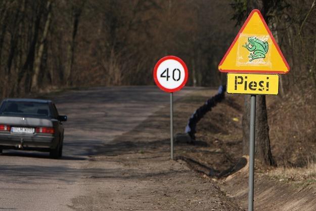 Uwaga, piesi... / Fot: Marek Maliszewski /Reporter