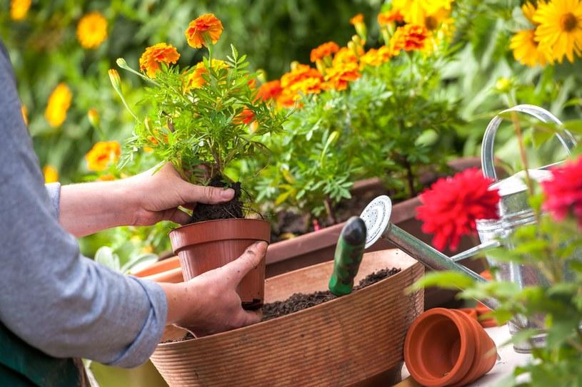 Uważaj na prace w ogrodzie. Mogą być naprawdę niebezpieczne! /©123RF/PICSEL