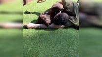 Uwielbia wygrzewać się na słońcu przytulając się do swojego właściciela