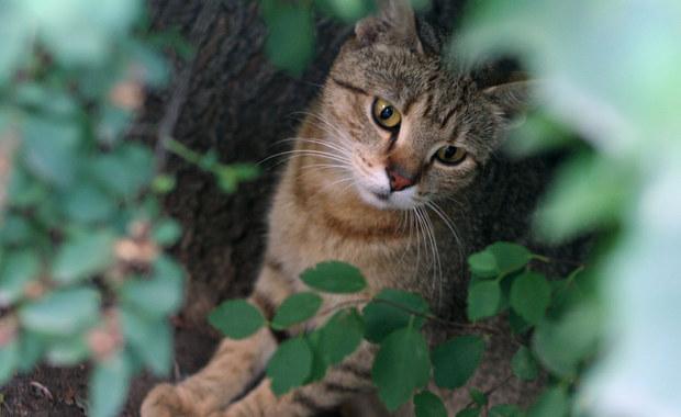 Uwielbiasz koty? Ten quiz jest właśnie dla Ciebie!
