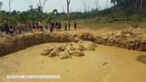Uwięzione słonie. Na pomoc ruszyli ludzie