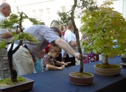 VII Festiwal Kultury Japońskiej w Krasiczynie - wystawa bonsai fot. Jacek Wajda /Agencja FORUM