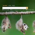 Visual Search - mocne uderzenie Binga