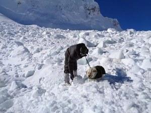 W akcji poszukiwawczej wykorzystano psy tropiące //INDIAN DEFENSE MINISTRY / HANDOUT /PAP/EPA
