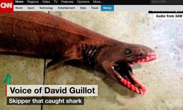 W Australii złapano niezwykłego rekina. Źródło: CNN /