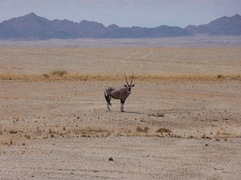 W drodze do Lüderitz, fot. Wojciech Rogala /materiały prasowe
