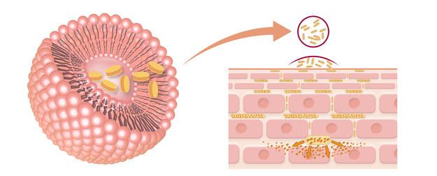 W kosmetykach UZDROVISCO działają fitonośniki /materiały prasowe
