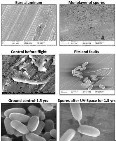 W kosmosie niektóre bakterie mogą przeżyć 1,5 roku. Ostatnie eksperymenty to potwierdzają /NASA