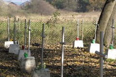 W lasach k. Bielin na Wołyniu pochowanych jest kilka tysięcy żołnierzy