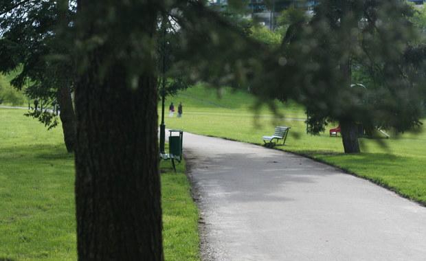 W mieście drzewa rosną... szybciej