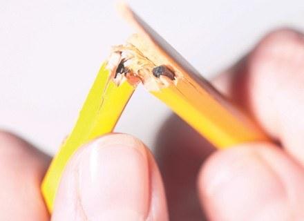 W najgorszej sytuacji są właściciele najmniejszych firm. /INTERIA.PL
