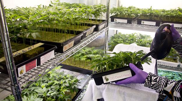 W ośrodku prowadzonym przez DeAngelo marihuanę podaje się w formie tabletek, balsamów i sprayu /fot. /Discovery Channel