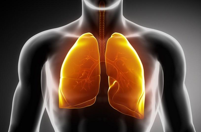 W płucach są obecne megakariocyty produkujące płytki krwi /123RF/PICSEL