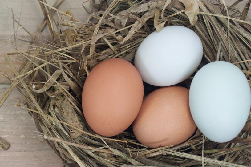W Polsce nie stosuje się środków, które skaziły jajka w wielu krajach Europy /123RF/PICSEL