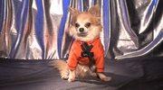 W pracowni psiej mody