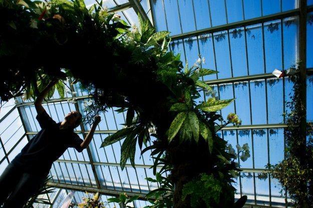 W przyszłości rośliny same będą informować nas, że wymagają podlania /AFP