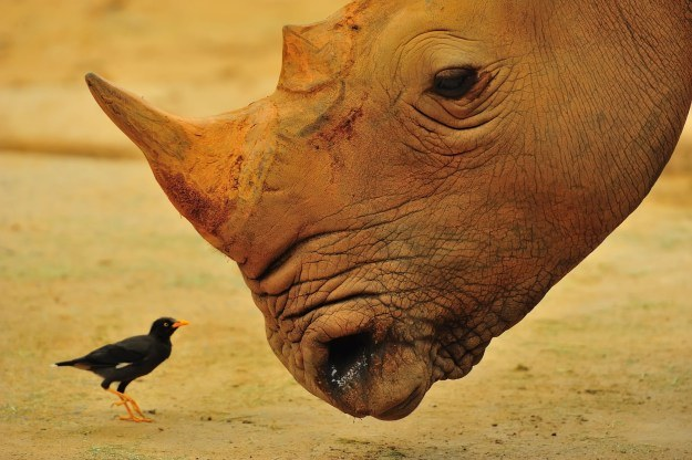 W świecie zwierząt rzadko siły są wyrównane. Większość gatunków z człowiekiem nie ma szans... /©123RF/PICSEL