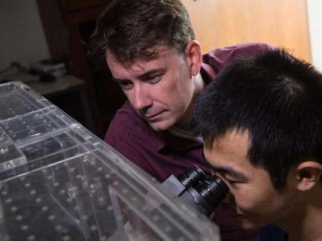 W swoich eksperymentach biolodzy użyli dwóch genetycznie modyfikowanych szczepów bakterii E. coli. Fot.Jeff Fitlow/Rice University /Zmianynaziemi.pl
