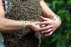 Wabi pszczoły miodem, by obsiadły jego ciało