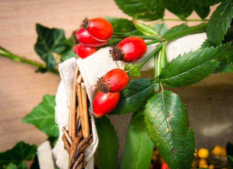 Walory dzikiej róży powinni docenić zwłaszcza rekonwalescenci /123RF/PICSEL
