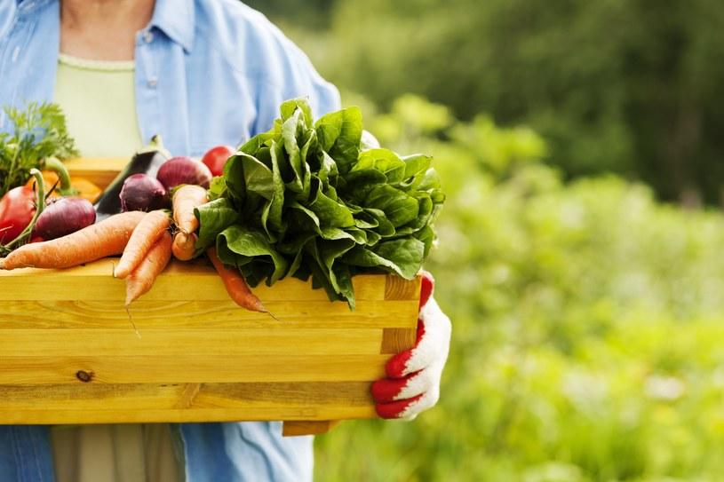 Warzywa z ekoupraw nie muszą być małe i brzydkie. Powinny jednak różnić się kształtem i kolorem /123RF/PICSEL