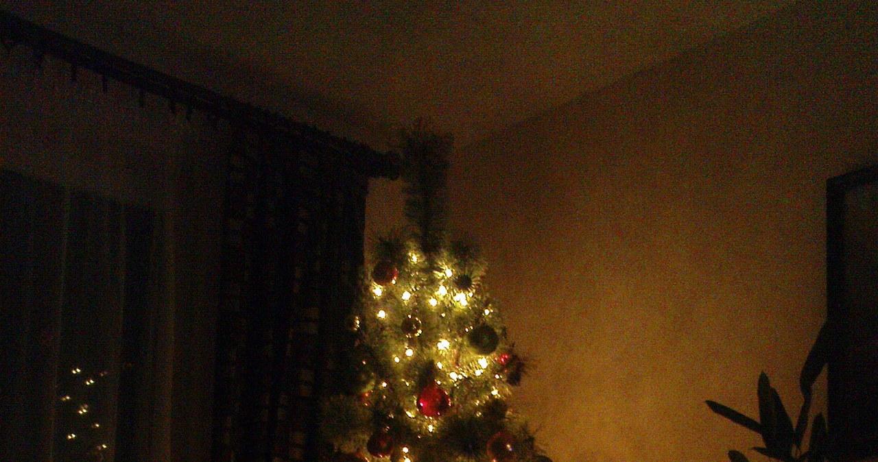 Wasze bożonarodzeniowe drzewka – zobacz zdjęcia