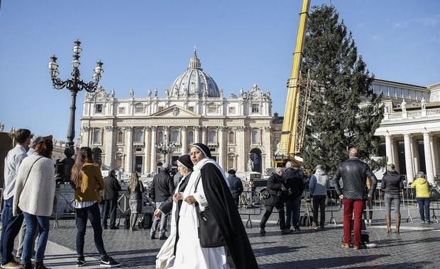 Watykan: Na placu Świętego Piotra ustawiono choinkę z Polski