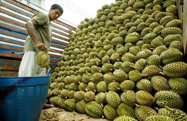 """Według Malezyjczyków durian to """"król owoców"""" /AFP"""