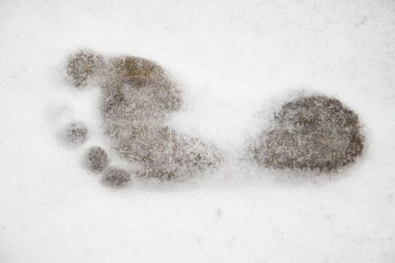 Według najnowszych badań naukowych, Yeti nie istnieje /©123RF/PICSEL