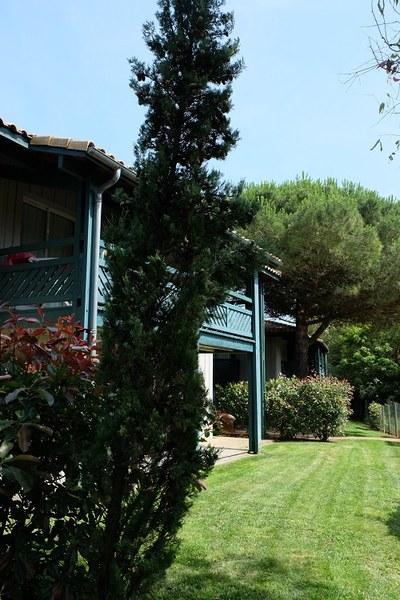 Nasz dom od tylu, taras, trawnik, eukaliptusy.