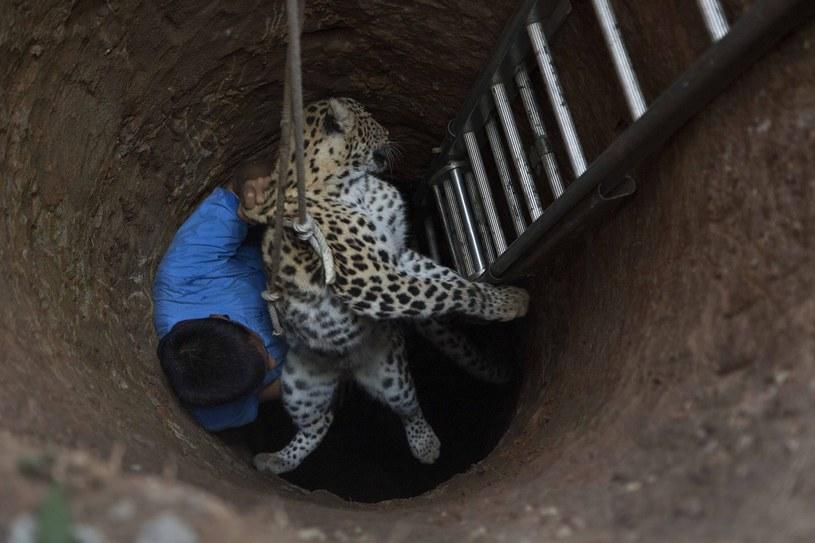 Weterynarz wyciągnął zwierzę ze studni /Associated Press /East News