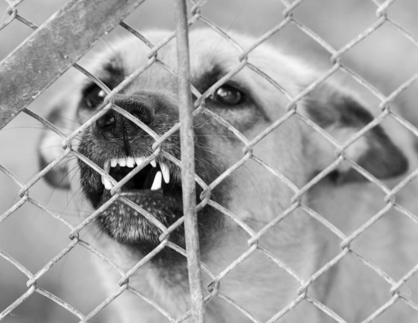 Wiadomo, że zwierzęta nie były szczepione /Zdj. ilustracyjne /123RF/PICSEL