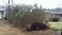 Wiatr wyrywał drzewa z korzeniami! Niesamowite nagranie!