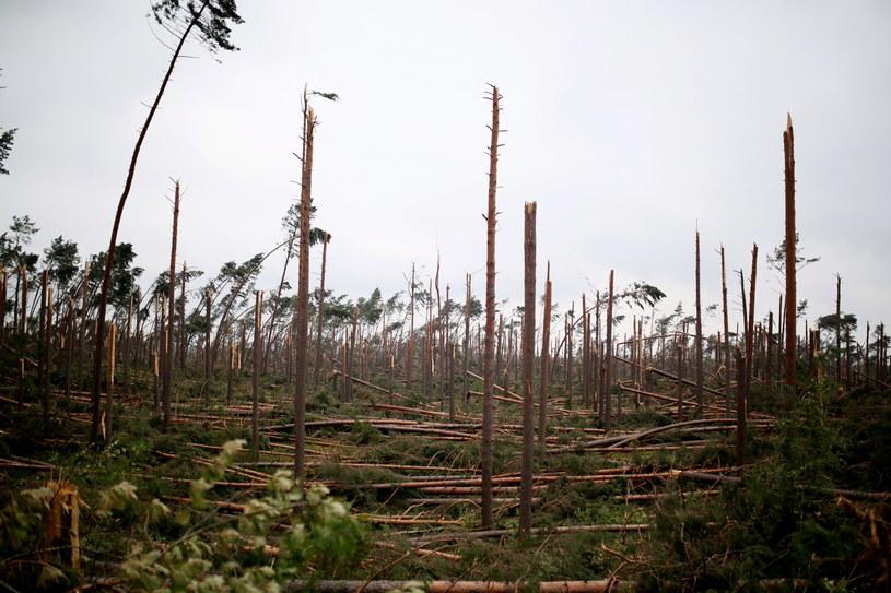 Widok na zniszczony las w okolicy miejscowości Rytel /Leszek Szymański /PAP