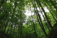 Więcej lasów niż się wydawało naukowcom