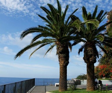 Wieczna wiosna na Maderze