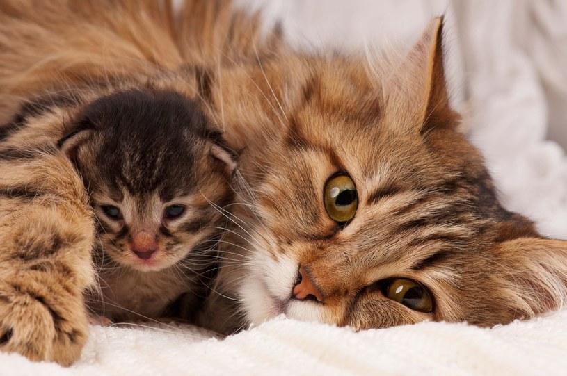 Większość łożyskowych zwierząt krótko po porodzie odgryza pępowinę /123RF/PICSEL