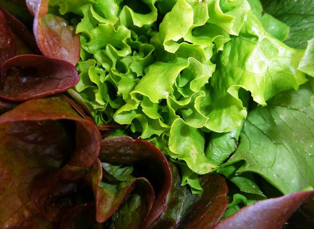 Większość przypadków zatruć spowodowana jest warzywami liściastymi /©123RF/PICSEL