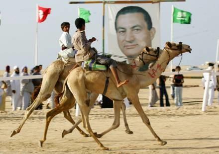 Wielbłądy nie mają w garbach wody /AFP