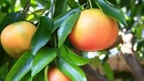 Wielka piątka odchudzających owoców