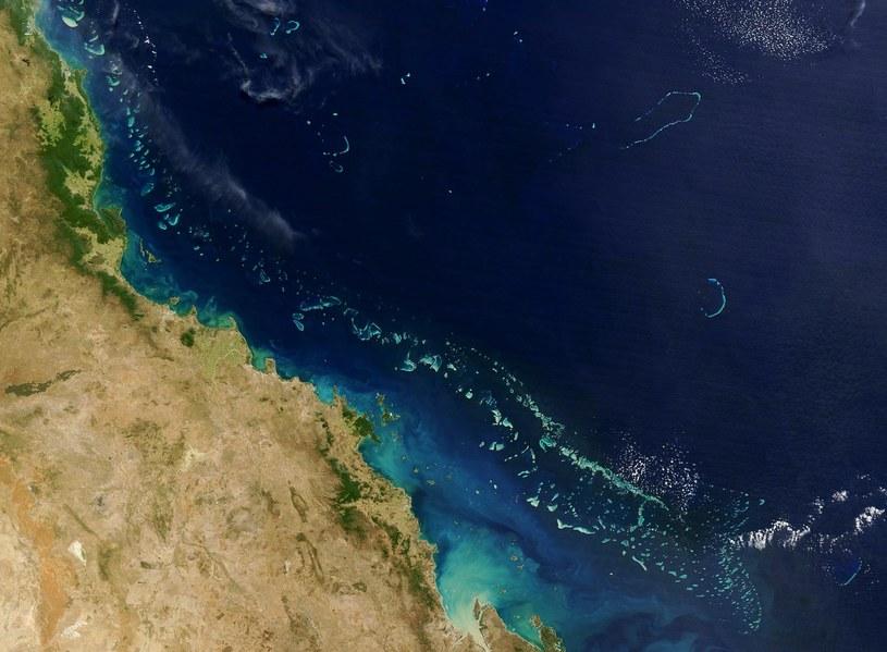 Wielka Rafa Koralowa umiera. Czy da się coś z tym zrobić? /AFP