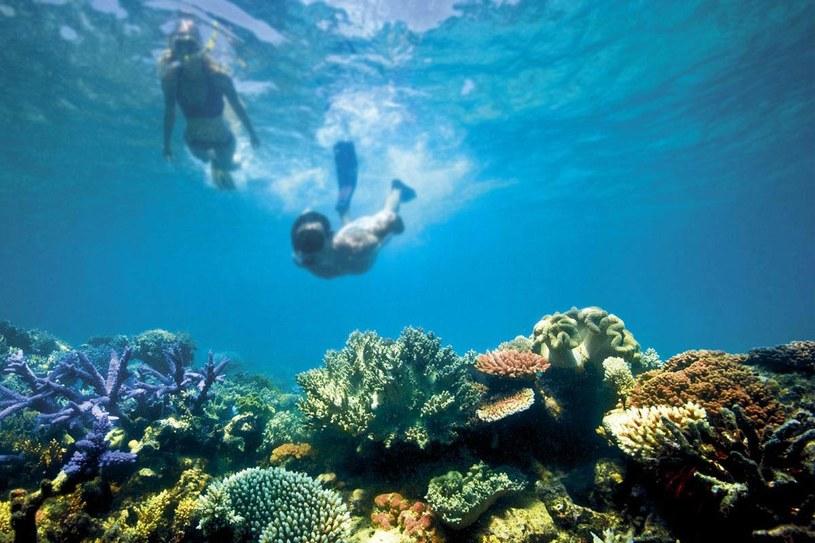 Wielka Rafa Koralowa wreszcie została wyceniona /materiały prasowe