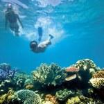 Wielka Rafa Koralowa wyceniona na 42,5 mld dolarów