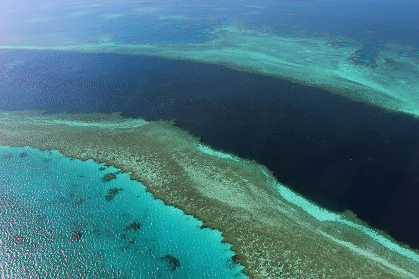 Wielka Rafa Koralowa /AFP