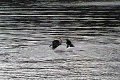 Wielkie sprzątanie olsztyńskiego jeziora
