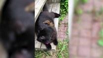 Wiewiórka znalazła nową mamę