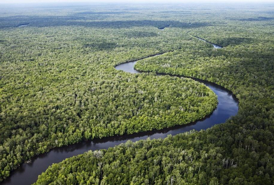 Wilgotny las równikowy (zdjęcie ilustracyjne) /KEMAL JUFRI/HANDOUT    /PAP/EPA