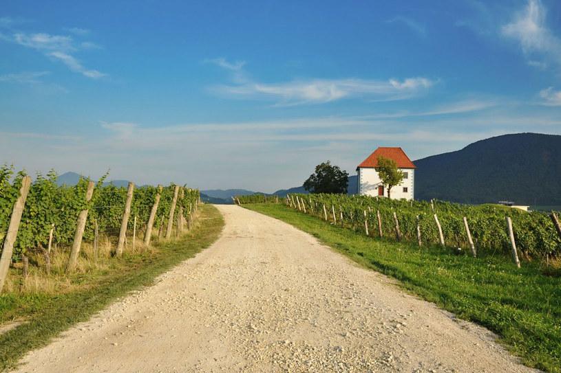 Winnice w niewielkiej Słowenii zajmują ponad 200 km kwadratowych. Połączenie intensywnego słońca południa z górską wilgotnością Alp wspaniale wpływa na jakość tutejszych win /123RF/PICSEL