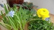 Wiosna w mojej kuchni